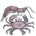 虾蟹,螃蟹,虾 prawn and crab