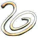 树胶带,橡皮筋 rubber band