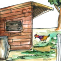 鸡寮,鸡棚 shed