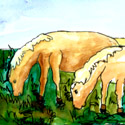 马吃草 horse grazing