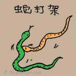 蛇打架 snakes fighting