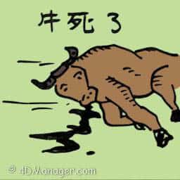 牛死去 dead cow