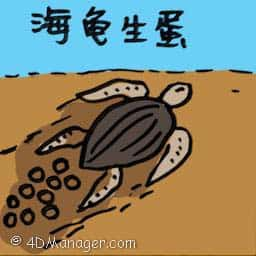 海龟生蛋 sea turtle laying eggs