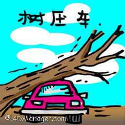 树压车 car crushed by tree