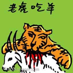 老虎吃羊 tiger hunts goat