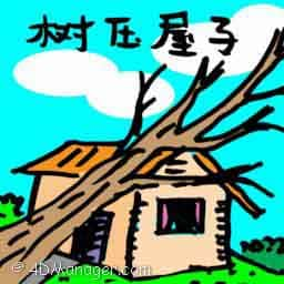 树压屋子 trees fell on roof